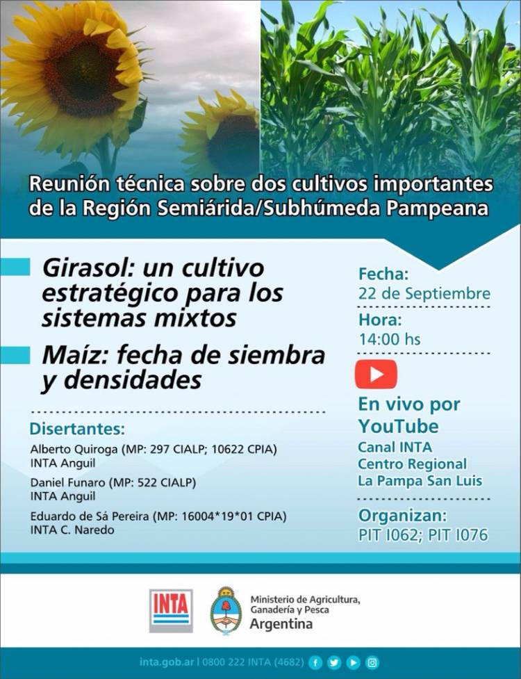 INTA organiza una reunión técnica sobre el girasol  y el maíz