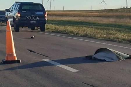 Identificaron a la persona que murió arrollada por un móvil policial