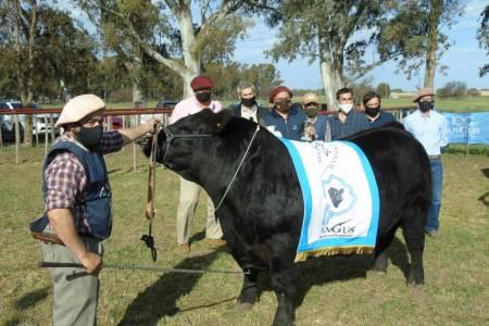La jura de Angus se lució en la Exposición Rural de Bahía Blanca