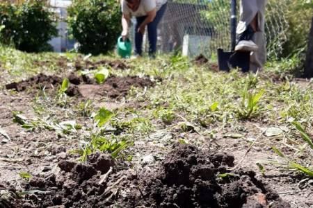 """El programa """"Nuestra Huerta"""" en plena siembra de verduras y hortalizas"""