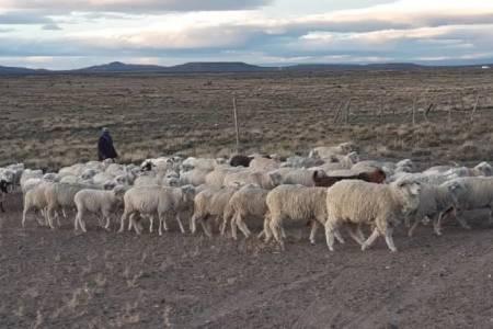 Desarrollo Agrario abrió la convocatoria para el financiamiento de proyectos productivos ovinos