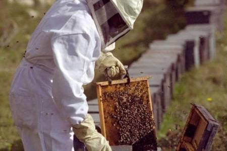 La Provincia de Buenos Aires potencial exportador de miel a China