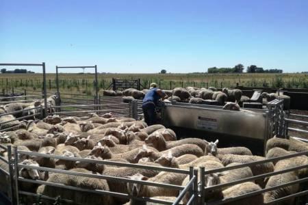 Seis firmas exportadoras compraron 80 mil kilos de lana bonaerense