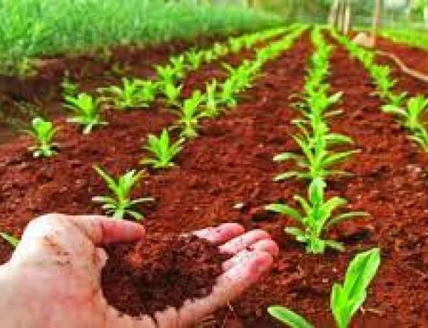 XI Congreso sobre uso y manejo de suelo